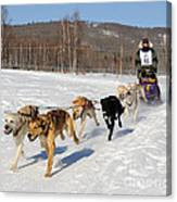 2010 Limited North American Sled Dog Race Canvas Print