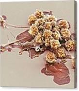 Activated Granulocytes, Sem Canvas Print