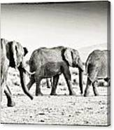 African Elephant In The Masai Mara Canvas Print