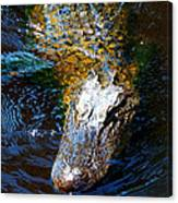 Alligator In Mississippi River Canvas Print