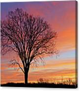 Bare Trees At Dawn Canvas Print