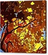 Beautiful Fall ... Canvas Print