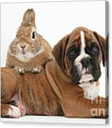 Boxer Puppy And Netherland-cross Rabbit Canvas Print