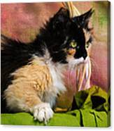 Calico Cat In Basket Canvas Print