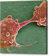 Cancer Cell Dividing, Sem Canvas Print