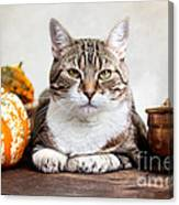 Cat And Pumpkins Canvas Print