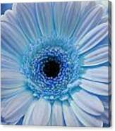 Cheeriest Blue Canvas Print