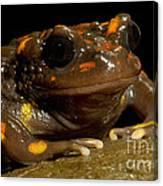 Chilean Mountains False Toad Canvas Print
