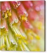 Close Up Of Flower Stamen Canvas Print