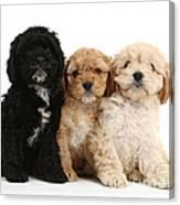 Cockerpoo Puppies Canvas Print