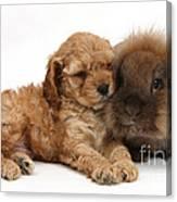 Cockerpoo Puppy And Rabbit Canvas Print