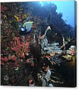 Colorful Reef Scene With Coral Canvas Print