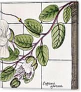 Colosseum: Flower Canvas Print