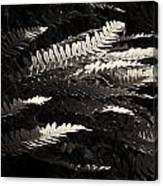 Common Polypody Canvas Print