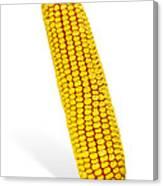 Corn Cob Canvas Print