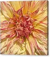 Dahlia Named Misty Explosion Canvas Print