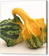 Decorative Squash Canvas Print