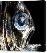 Deep Sea Hatchetfish Canvas Print