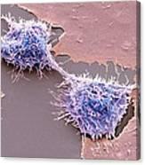 Dividing Hela Cells, Sem Canvas Print