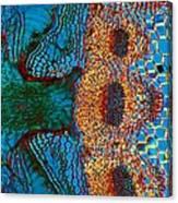 Dodder Parasitic Plant Canvas Print