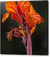Dying Flower Canvas Print