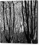 Epping Forest Canvas Print