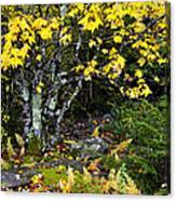 Fall Color Highland Scenic Highway Canvas Print