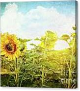 Field Of Colorful Sunflowers And Blue Sky  Canvas Print