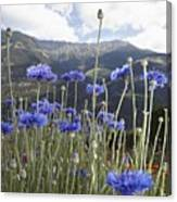 Field Of Flowers In Rural Landscape Canvas Print