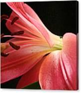 Floral 0039 Canvas Print