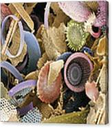 Fossilised Diatoms, Sem Canvas Print