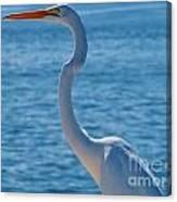 Great Egret  White Heron Canvas Print