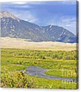 Great Sand Dunes Bison Canvas Print