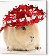 Guinea Pig Wearing A Hat Canvas Print