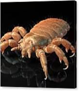 Head Louse, Artwork Canvas Print