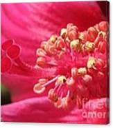 Hibiscus Named Luna Rose Canvas Print