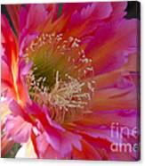 Hot Pink Cactus Flower Canvas Print