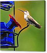 Hummer At The Feeder Canvas Print