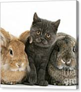 Kitten And Rabbits Canvas Print