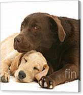 Labradoodle And Labrador Retriever Canvas Print