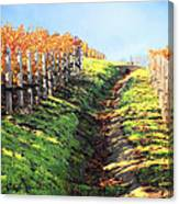 Late Autumn In Napa Valley Canvas Print