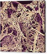 Liver Blood Vessels, Sem Canvas Print