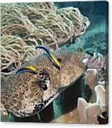 Map Pufferfish Canvas Print