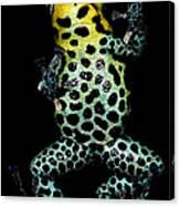 Mimic Poison Frog Canvas Print
