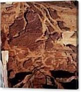 Natural Carvings Canvas Print