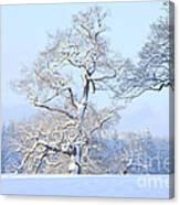 747449ec21773 Oak In Snow Photograph by Mark Taylor