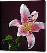 Oriental Lilly Canvas Print
