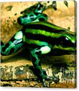 Pasco Poison Frog Canvas Print