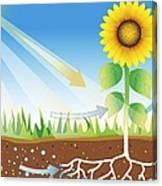 Photosynthesis, Artwork Canvas Print