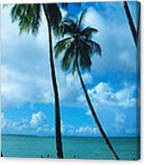 Pigeon Point On Tobago Canvas Print